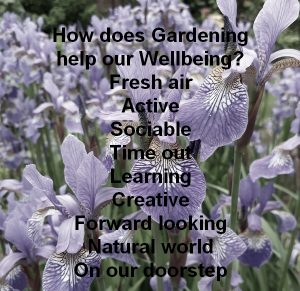 Make time for wellbeing – out in the garden