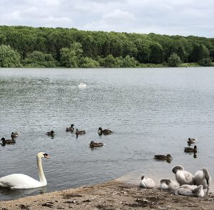 FOC Socially Distanced Net-Walk inc (own) Packed Lunch! Thornton Reservoir